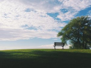 Picture of an empty park bench under a tree.