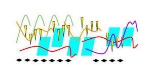 Polyphonic texture